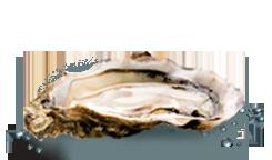 huitres-marennes-oleron-fine-de-claire